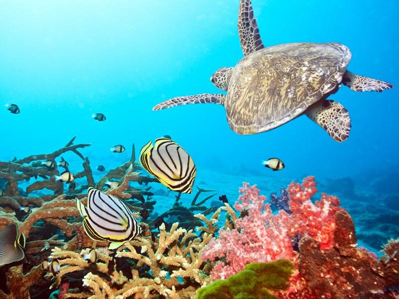 Les fonds sous marins sont en dangers
